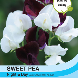 Sweet Pea Night & Day
