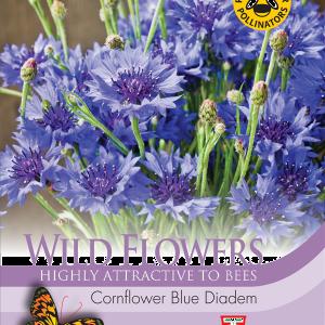 Wild Flower Cornflower Blue