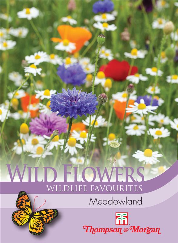 Wild Flower Meadowland