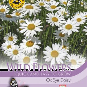 Wild Flower Oxeye Daisy
