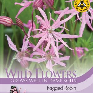 Wild Flower Ragged Robin