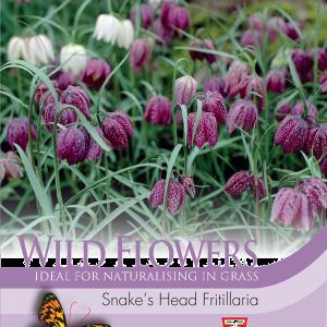 Wild Flower Snakes Head