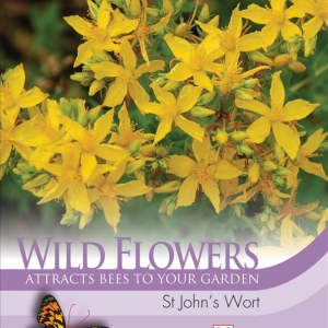 Wild Flower St Johns Wort