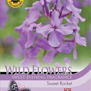 Wild Flower Sweet Rocket