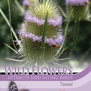 Wild Flower Teasel
