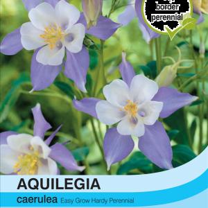 Aquilegia Caerulea