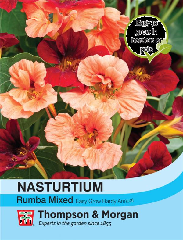 Nasturtium Rumba Mixed