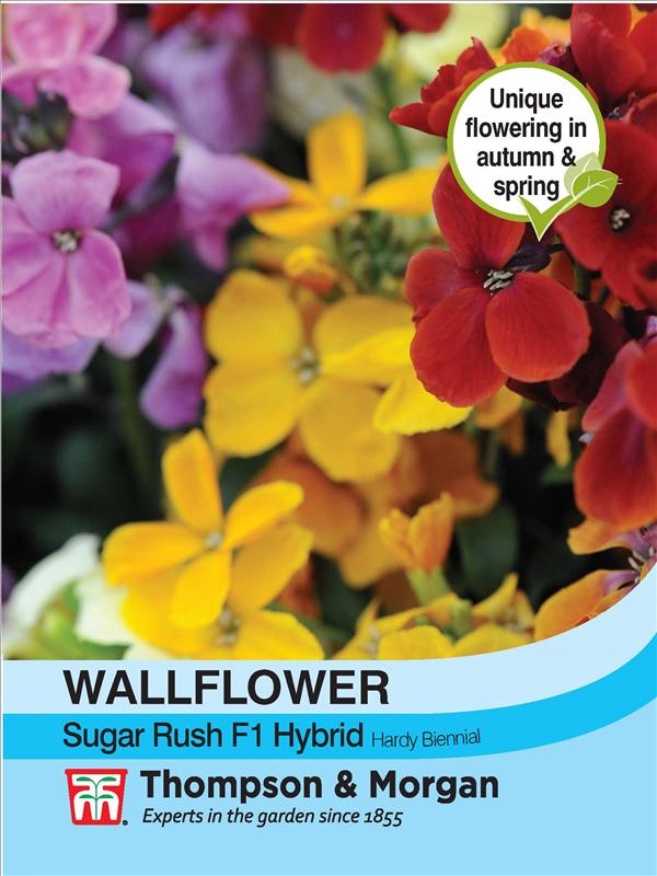 Wallflower Sugar Rush F1 Hybrid