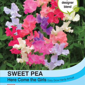 Sweet Pea Here Come the Girls