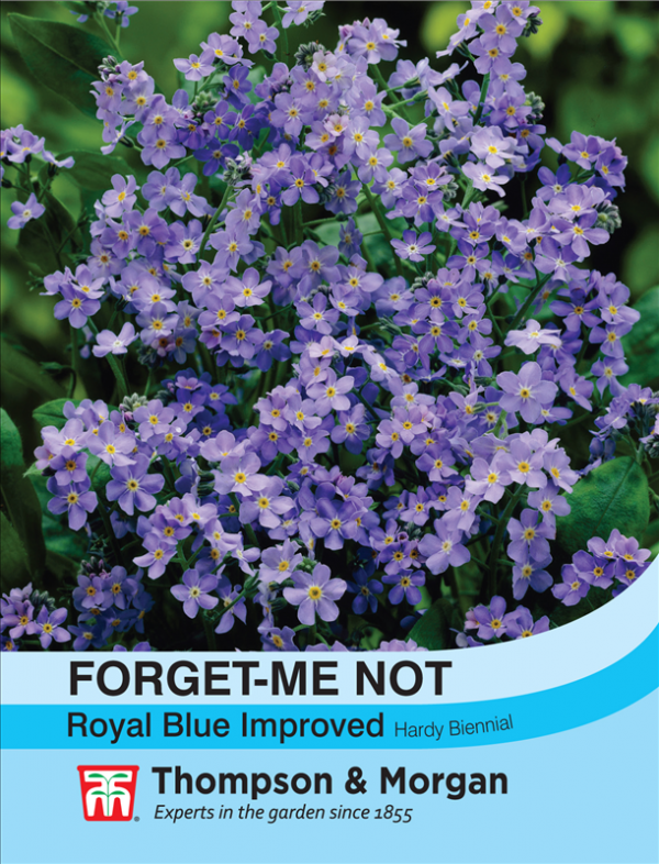 Forget-me-not Royal Blue