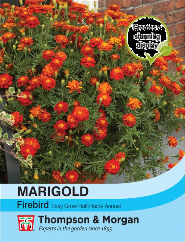 Marigold Firebird