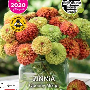 Zinnia Queeny Mixed