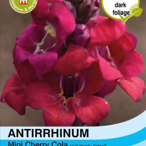 Antirrhinum Mini Cherry Cola
