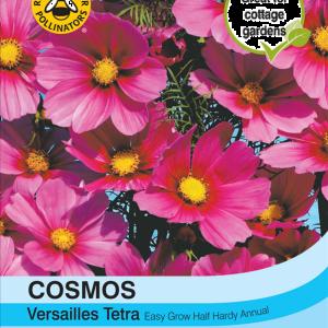 Cosmos Versailles Tetra