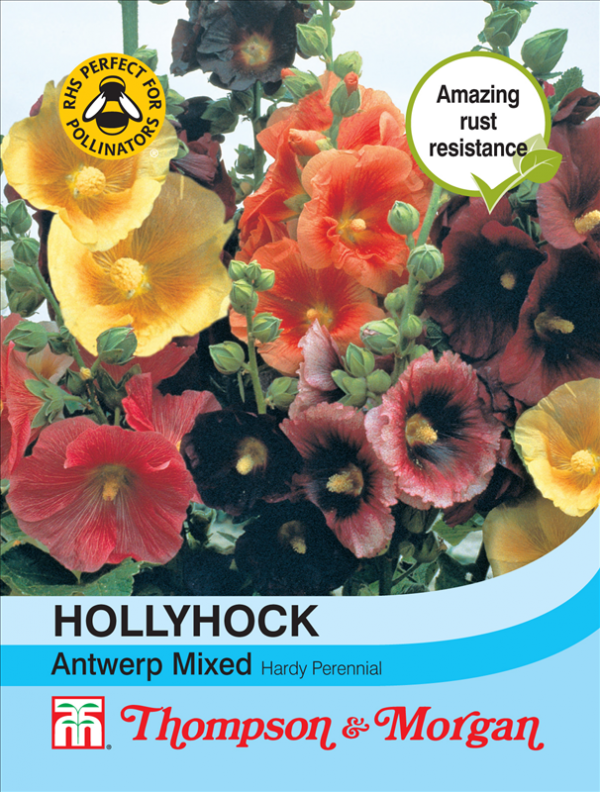 Hollyhock Antwerp Mixed