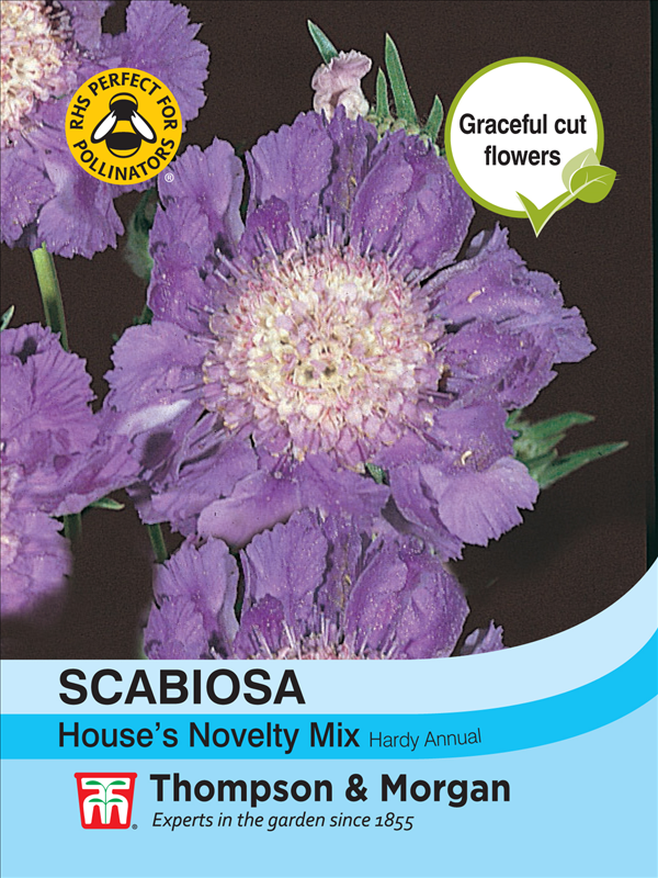 Scabiosa House's Novelties Mix