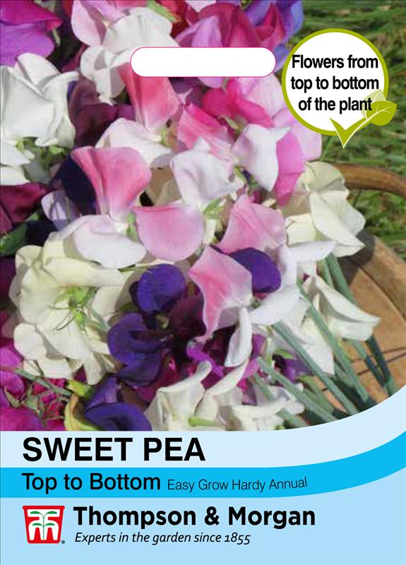 Sweet Pea Top to Bottom