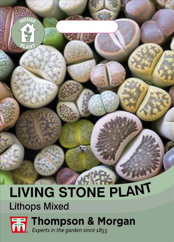 Living StonePlant