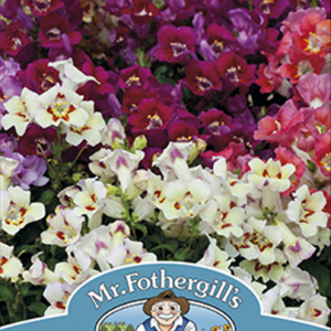 Antirrhinum Antiquity F1