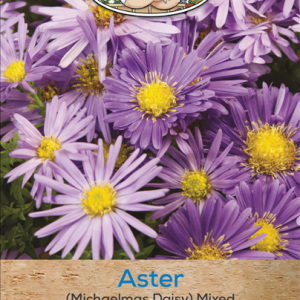 Aster (Michaelmas Daisy)