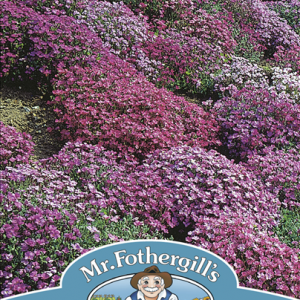 Aubrieta Cascade Mixed