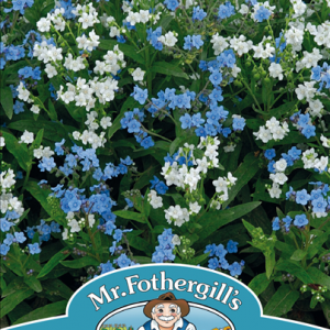 Chinese Forget-Me-Not Chill Out
