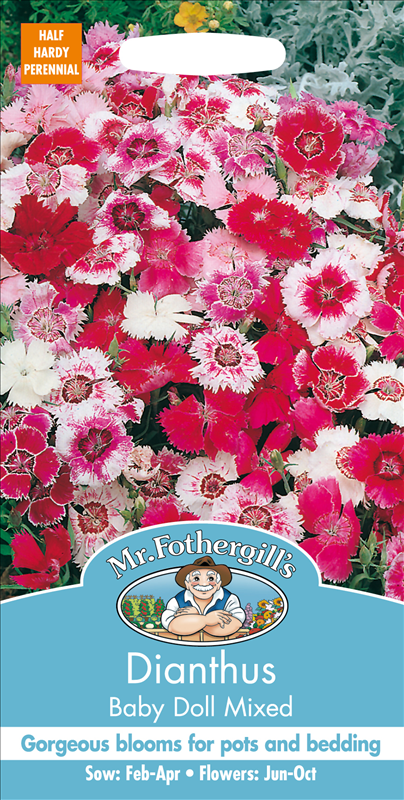 Dianthus Baby Doll Mixed