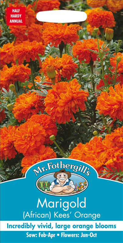 Marigold (African) Kees' Orange