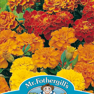 Marigold (French) Dwarf Double Mixed
