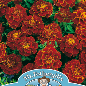 Marigold (French) Red Cherry