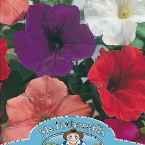 Petunia Confetti Mixed F2