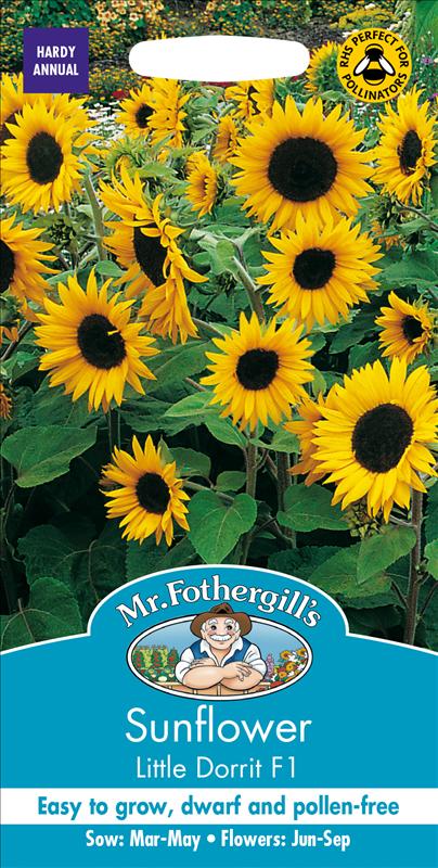 Sunflower Little Dorrit