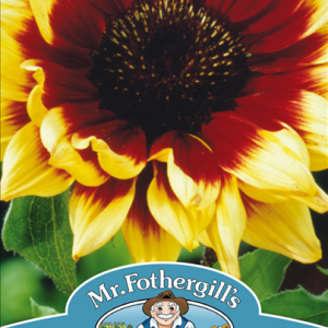 Sunflower Magic Roundabo