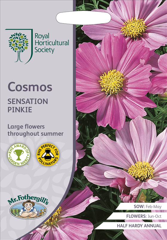 RHS Cosmos Sensation Pinkie