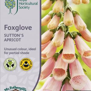 RHS Foxglove Sutton's Apricot