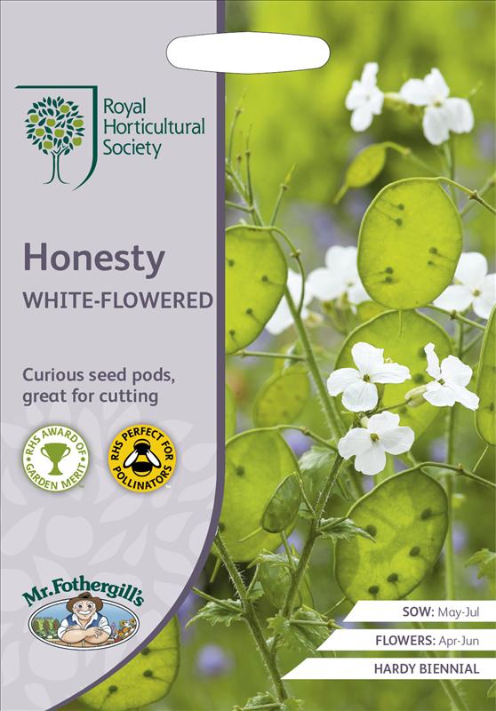 RHS Honesty White-Flower