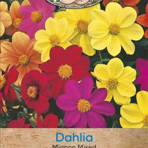 Dahlia Mignon Mixed