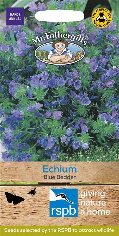 Echium Blue Bedder