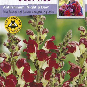 Antirrhinum Night & Day