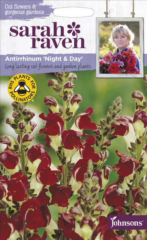 Antirrhinum Night & Day