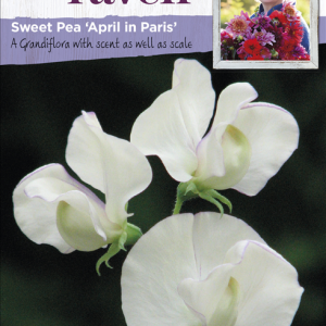 Sweet Pea April In Paris