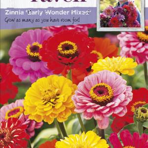 Zinnia Early Wonder Mixed