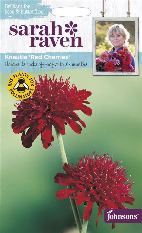 Knautia Red Cherries
