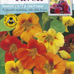Nasturtium Tip Top Mixed