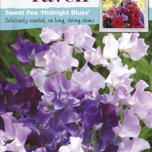 Sweet Pea Midnight Blues