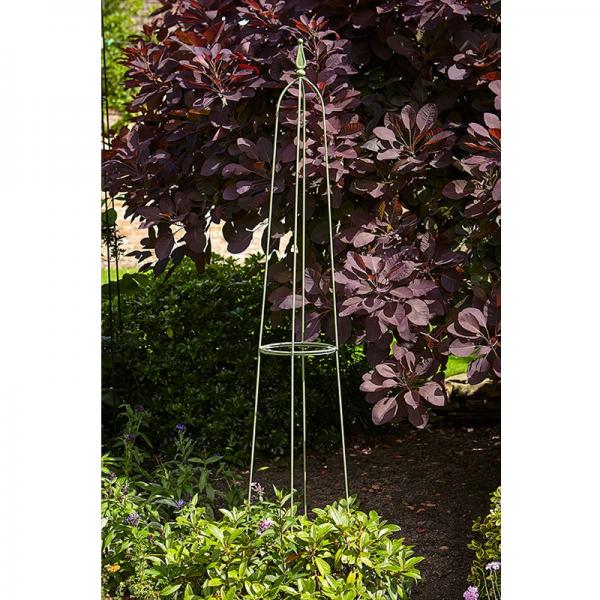 Byland Obelisk Sage - 1.5m