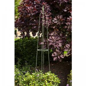 Byland Obelisk Sage - 1.95m