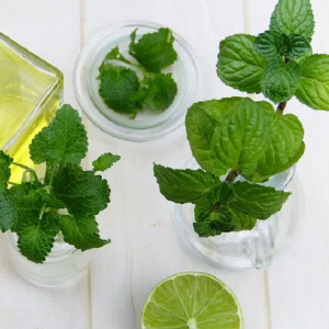 Mint Spearmint 1L