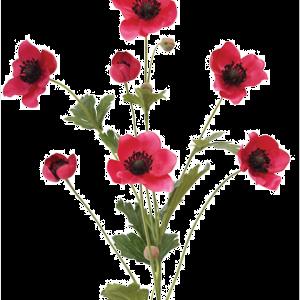 Japanese Anemone Red