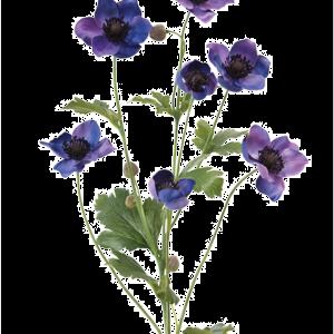 Japanese Anemone Blue